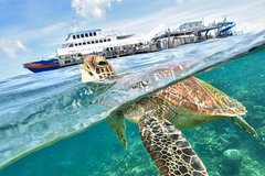 Outer Reef Pontoon Cruises Experience from Cairns