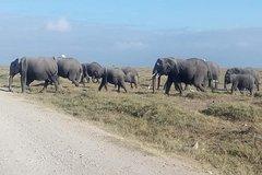 3 Days Camping Safari in Amboseli National Park Kenya