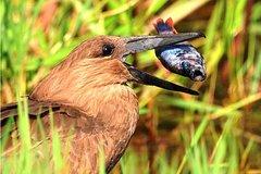 1 Day Shoebill Birding - Day Trip - Mabamba Swamp