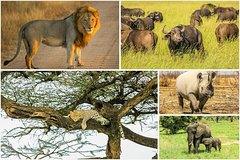 Big 5 Safari Experience at Pilanesberg National Park