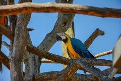 Imagen Avistamiento de aves en el Aviario Nacional desde Cartagena