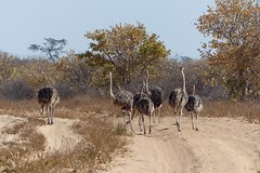 Moremi (Okavango) day trip