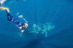 Snorkel with Whale Sharks - Male and Female Tour (Ningaloo)