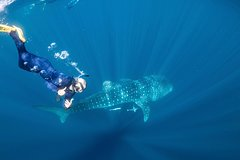 Snorkel with Whale Sharks - Female Only Tour (Ningaloo)