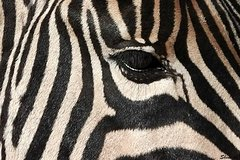Best of Both - Kraggakamma Game Park and Addo Park Tour