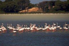 Imagen Private Day Trip from Malaga: Doñana National Park & Sanlucar
