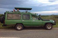 4 Days Gorilla Trekking Chimps Big 5 and Big Cats Safari