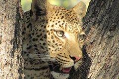Predator Trail Botswana - Ntshu Safaris