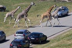 Copenhagen to Safaripark Tour