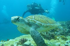 6 DIVES PACKAGE for certified divers