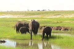 Chobe Day Trip: Boat Safari & Game Drive Incl Lunch