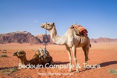 Family Tour in Wadi Rum Desert   7 hours   lunch included