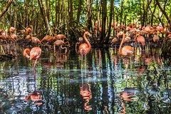 Imagen Aviario National Park Shared Tour