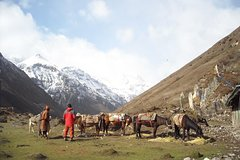 7 Day Jomolhari Trek in Bhutan