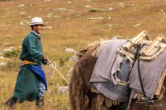 2 days horse trek in Naiman nuur and the central part of Mongolia 8 days