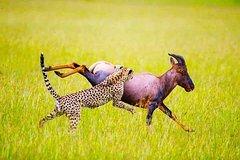 20 Days Uganda Kenya and Tanzania Safari Victoria Falls and Cape Town