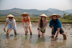 Full Day Kuang Si Warerfalls & Rice Farming Experience in Living Land