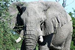 2 Days 1 Night Camping Safari In Chobe National Park