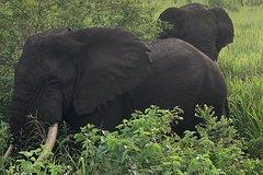 06 Days Budget Wildlife and Gorillas Tour Uganda