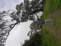 Hiking Serra Malagueta