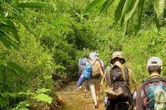 Northern Ethnic Minority Trek with Home-stay 1 night