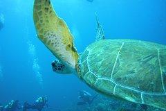 Bonaire private guided dive