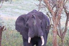 12 Days Family Gate away to the land of Mysterious Wildlife Adventure and Zanzibar