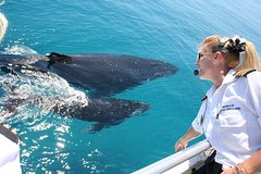 Whale Watching Cruise from Redcliffe, Brisbane or the Sunshine Coast