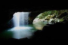 Springbrook Nature Tour