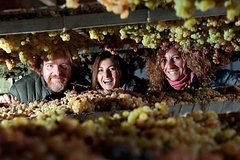 Piazzano wine experience: discover a family business winery close to Floren