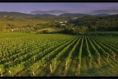 Pure tuscan wine tasting experience at Podere Ema close to Florence