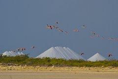 Flamingo Salt Tour