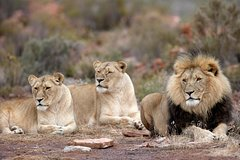 Aquila Safari Private Game Reserve Sunset Game Drive