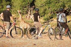 BIg Game Cycle Safari (MTB Mountain Bike) Botswana