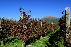 Pompeii & Vesuvius Wine Tour SKIP THE LINE from Amalfi Coast - small gr