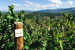 TRANSFER TOUR Florence to Rome with a wine experience in MONTEPULCIANO
