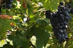 From Venice, Valpolicella TOP WineTour: taste Amarone with a certified Somm