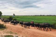 Countryside Adventure and Cycling Tour