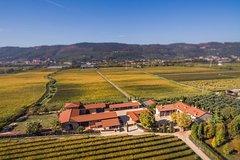 Happy wine day experience at Capurso wine close to Verona