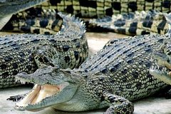 Cape Town- 3days Attraction Crocodule Cageandcape Point andwine Testing
