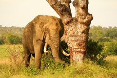 20-Day Kruger to Cape Town Adventure Camping Tour from Pretoria