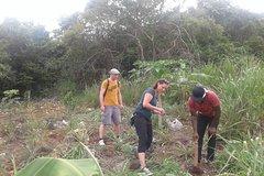 Tour a Jamaican Farm