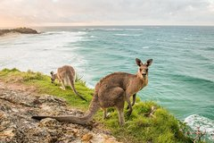 Adventure Cruise and Island tour direct from Brisbane city