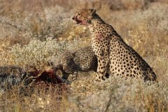 Etosha Safari Private Guided Tour