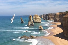 [PRIVATE TOUR] Express Great Ocean Road | Day Trip