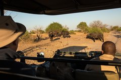 5 Night Kruger Park Golf Safari