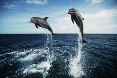 Private Transfers - Nelson Bay Tour with Dolphin Watch Cruise & Sandboarding