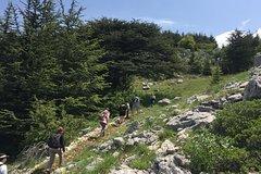 Barouk Cedar Forest, Beiteddine, Deir El Qamar (Private) Guided Tour with Hike