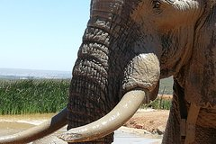 Addo Elephant Park day visit plus 2 hours in an open vehicle with a park ranger