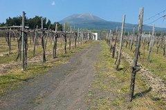 Pompeii-Wine tasting tour with licensed guide included